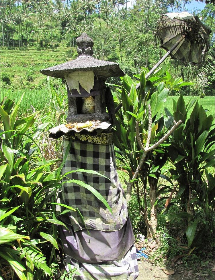rizieres-ubud (6)