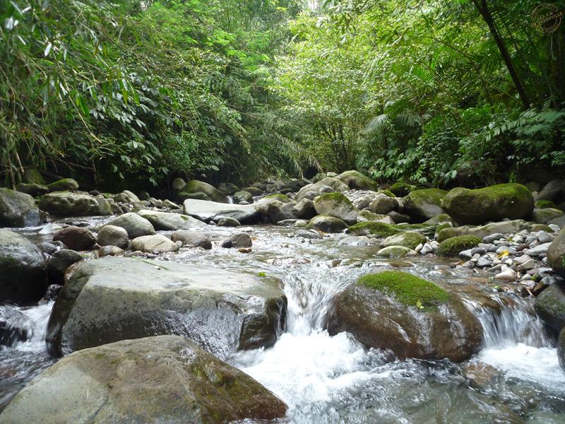 Rivière au Batukaru