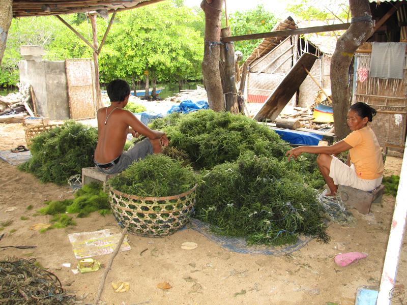 Cultivateurs d'algues