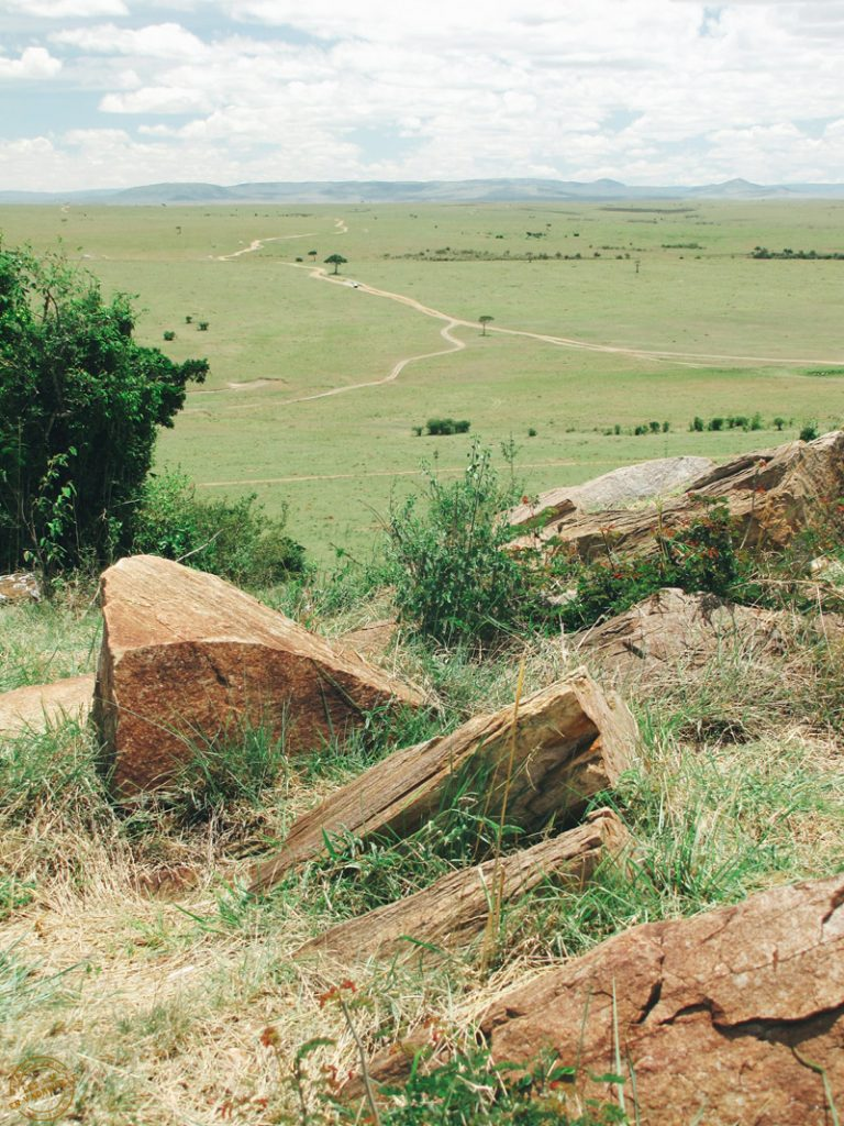 Dominer les plaines du Masai mara