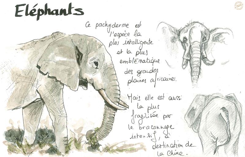 aquarelle-rwanda8