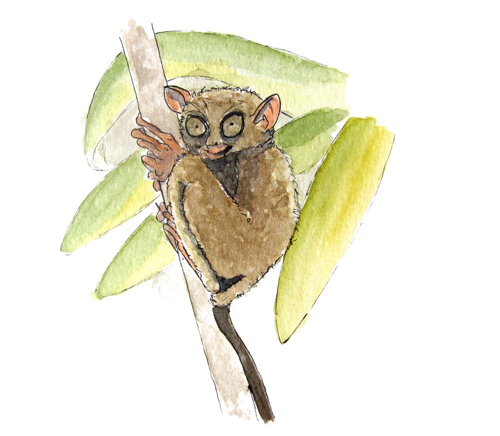 tarsier-aquarelle