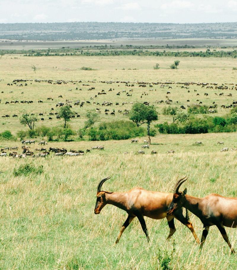 kenya-safari-masai-mara