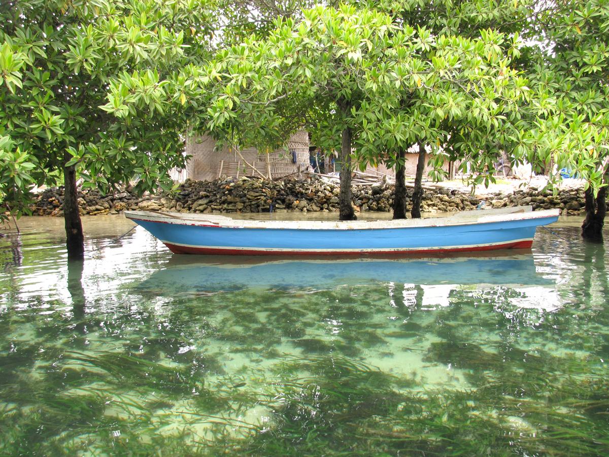 Mangrove à Lembongan