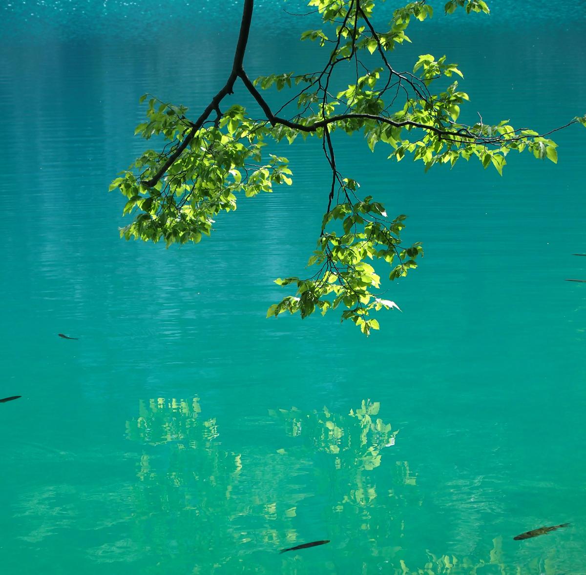 plitvice-jezera-lacs (5)