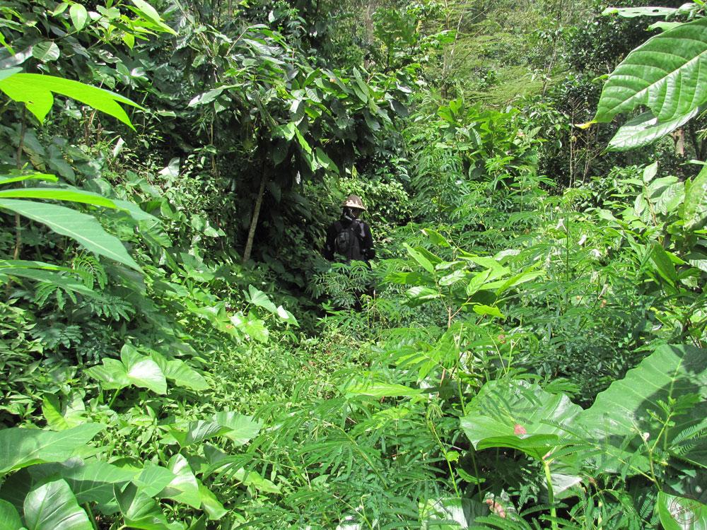 Notre guide Ram à Munduk
