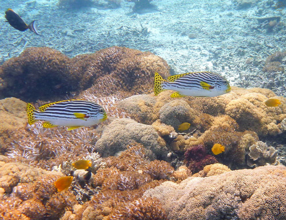 Snorkeling à Nusa Lembongan