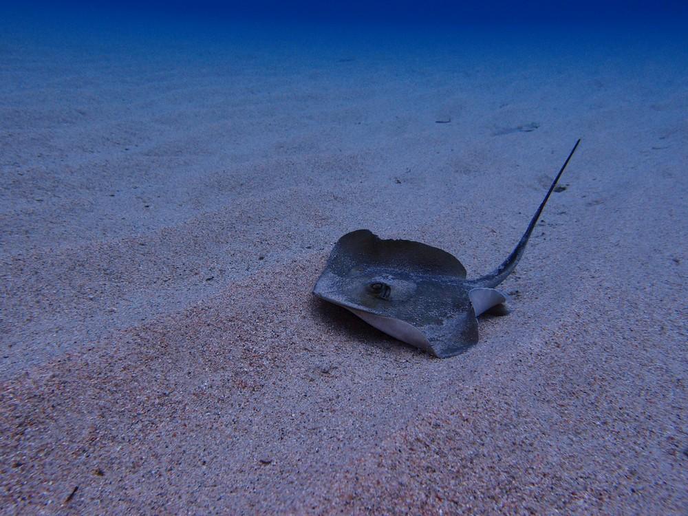 Snorkeling Plage du Cavu