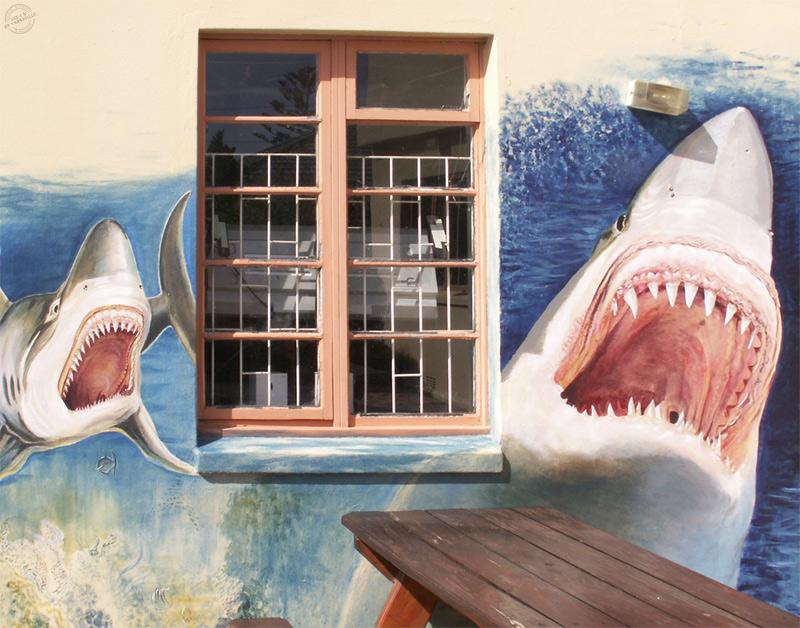 White Shark Diving