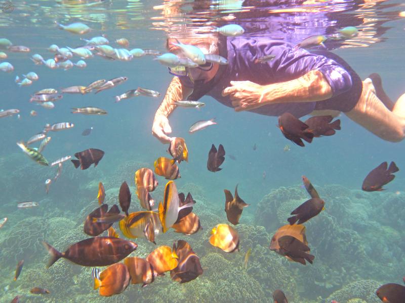 Snorkeling à Lovina