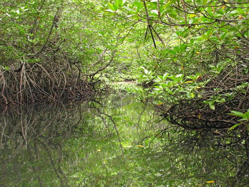 Mangrove de Nusa Lembongan
