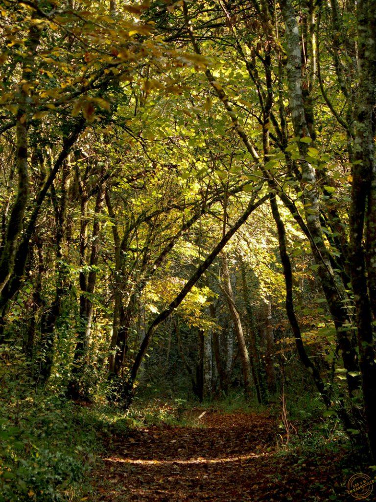 Couleurs d'automne à Gourbachin