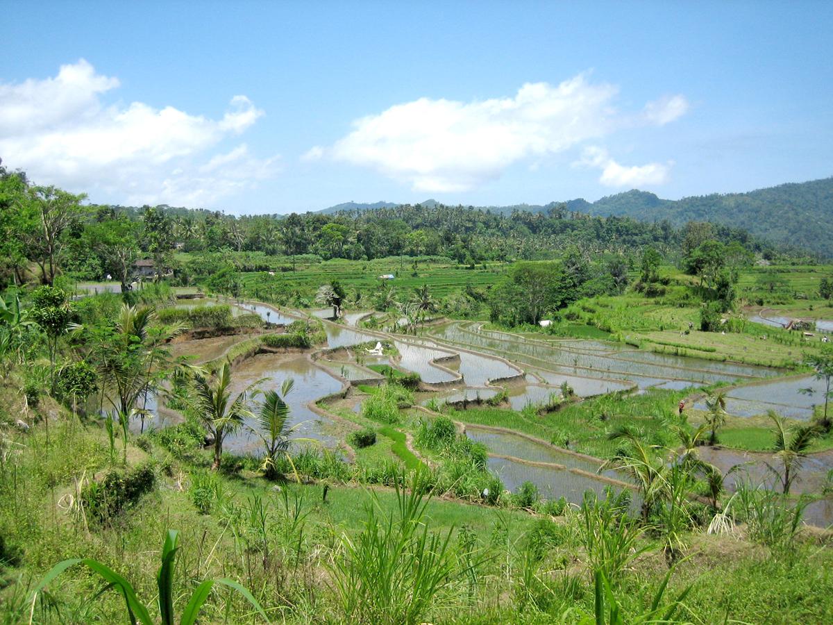 Rizières du Tegalalang