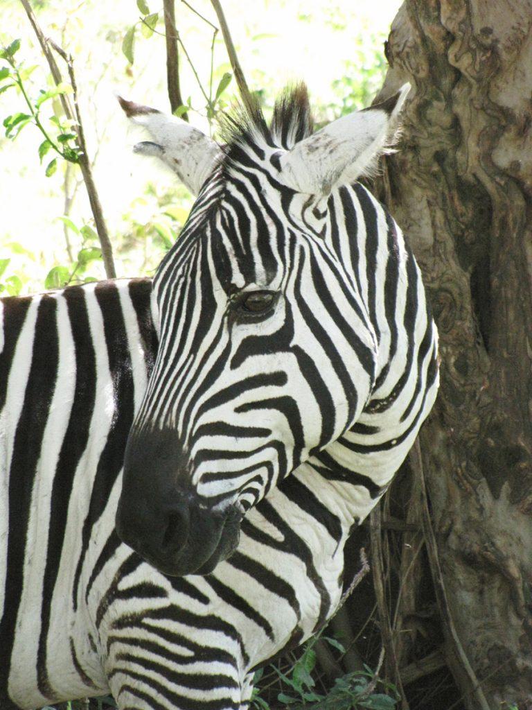 safari-kenya-nakuru