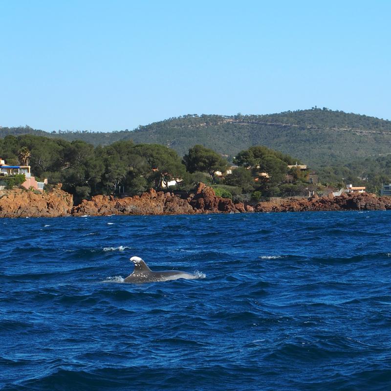 dauphins-st-raphael2