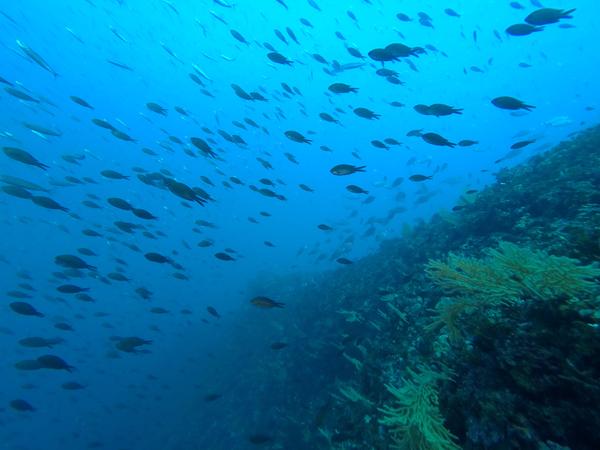 plongee-portofino3