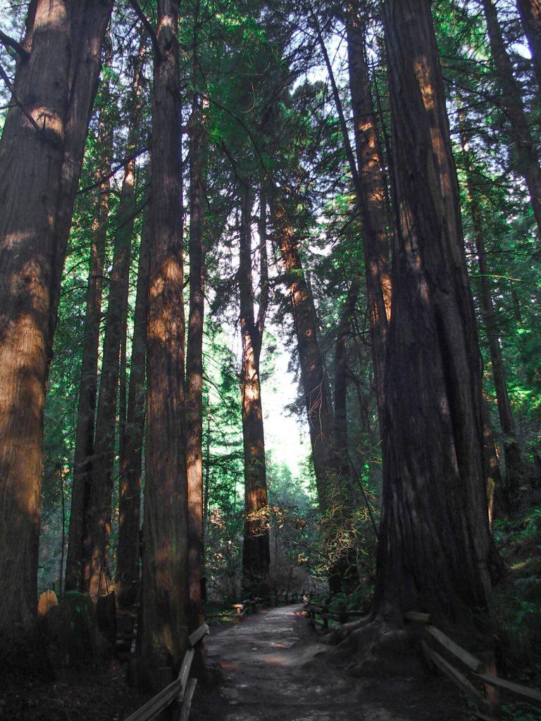 Forêt de Muir Woods