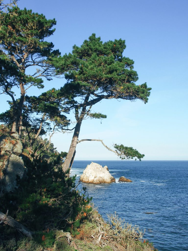 point-lobos