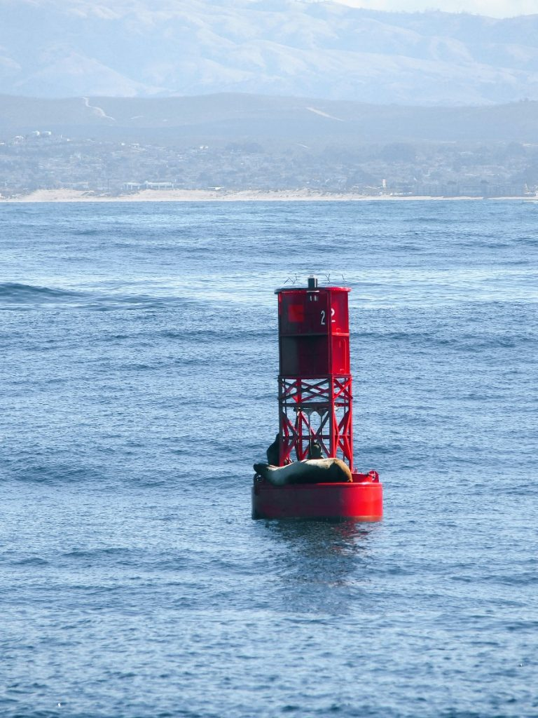 Monterey Whale watching (20)