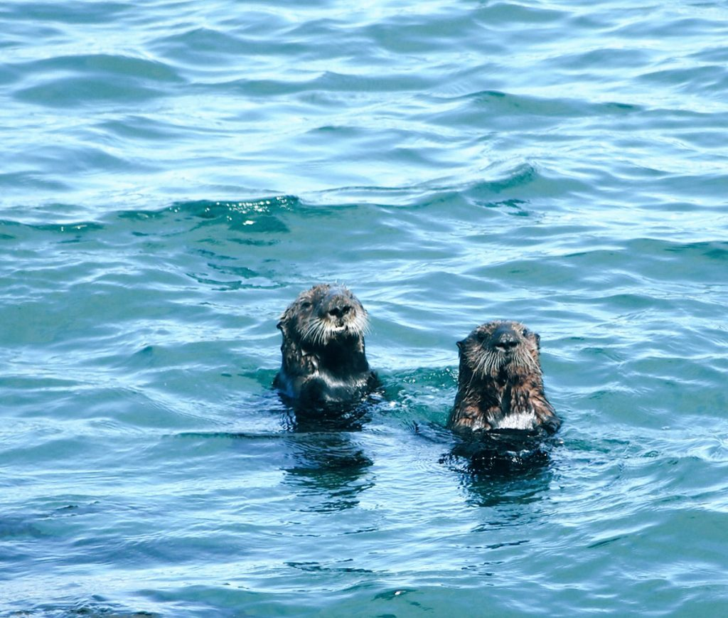 Monterey Whale watching (59)