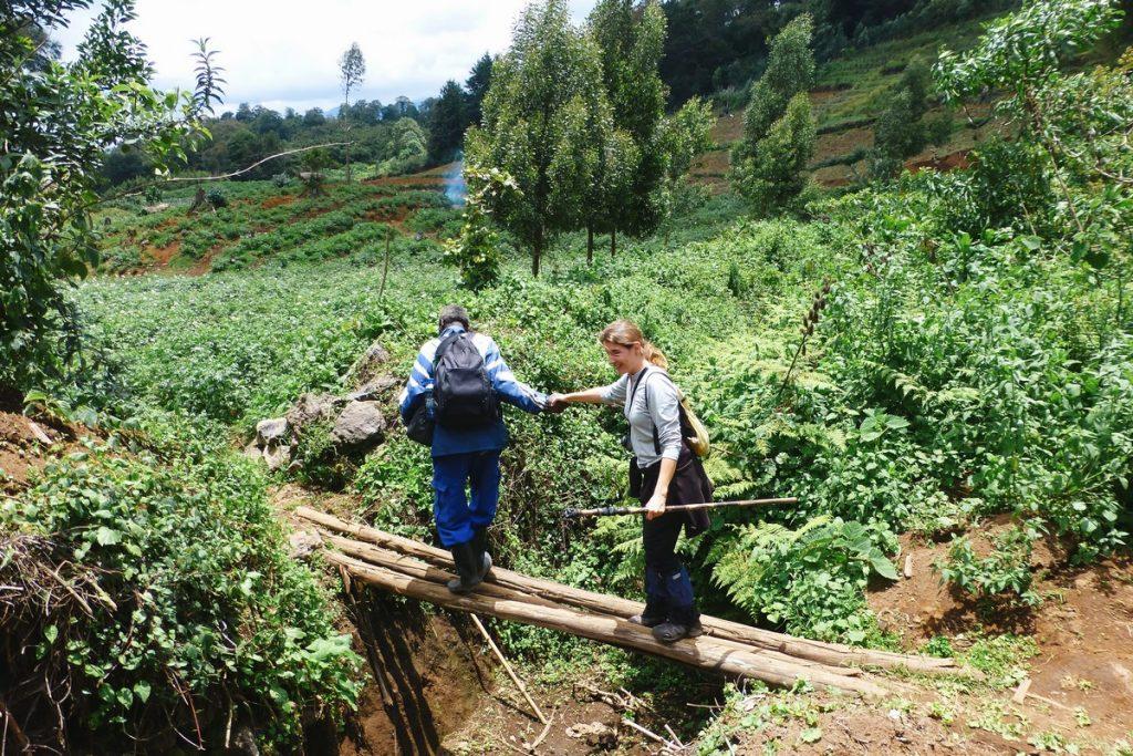 gorille_rwanda