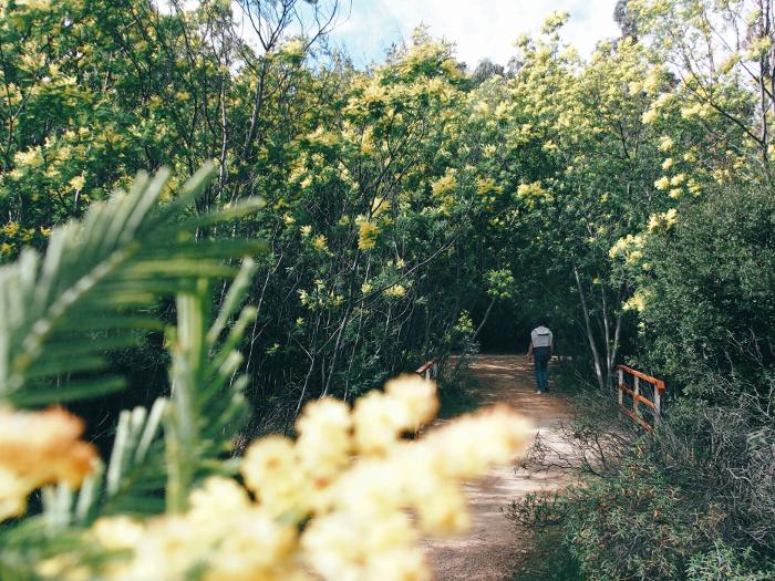 esterel_mimosa (15)