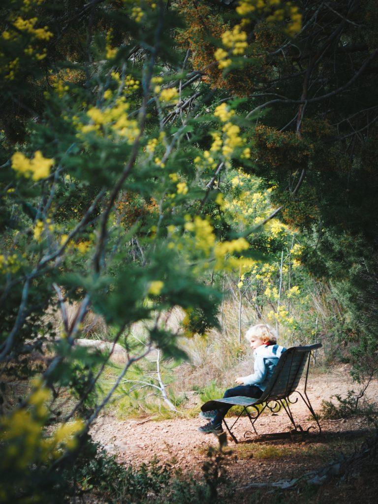 mimosa_esterel (1)