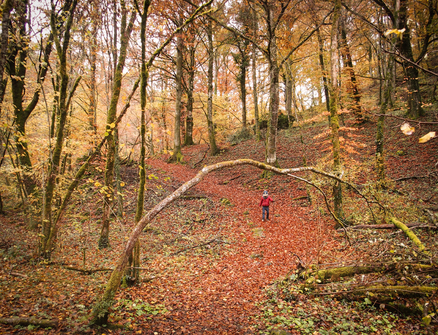 cantal-automne (44)